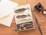 【ネコポスOK】 アメリカ CAVALLINI/カバリーニ グリーティングカード(2つ折り) Whale Chart