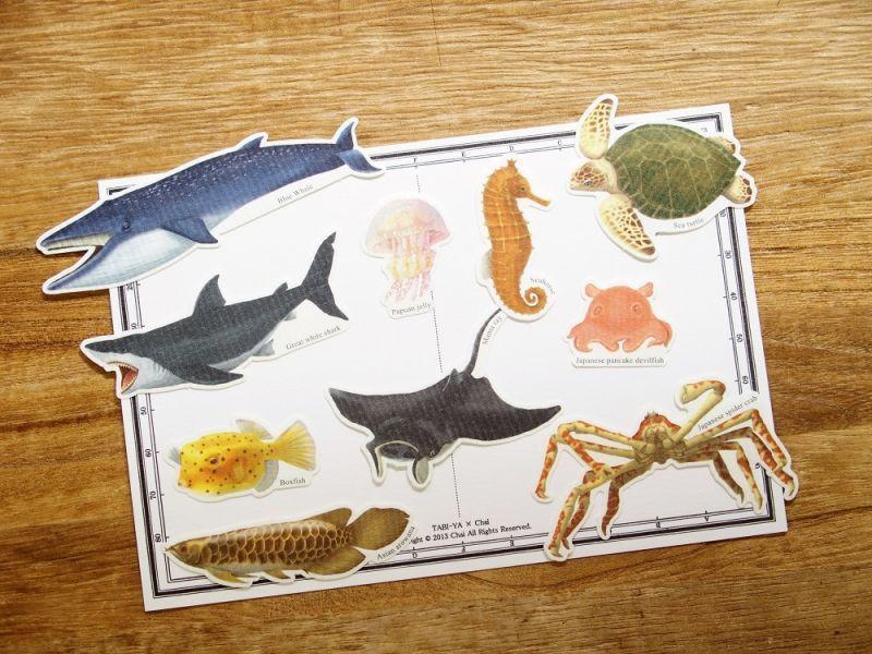 画像1: 【ネコポスOK】 Pictorial sticker/ピクトリアルステッカー 海洋生物