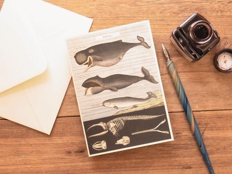 画像1: 【ネコポスOK】 アメリカ CAVALLINI/カバリーニ グリーティングカード(2つ折り) Whale Chart