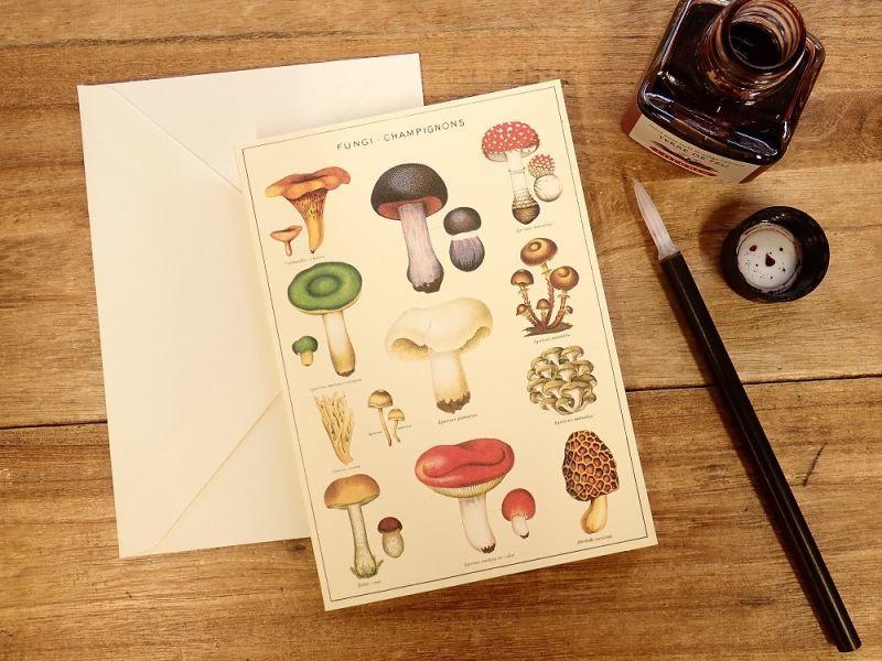 画像1: 【ネコポスOK】 アメリカ CAVALLINI/カバリーニ グリーティングカード(2つ折り) Mushrooms