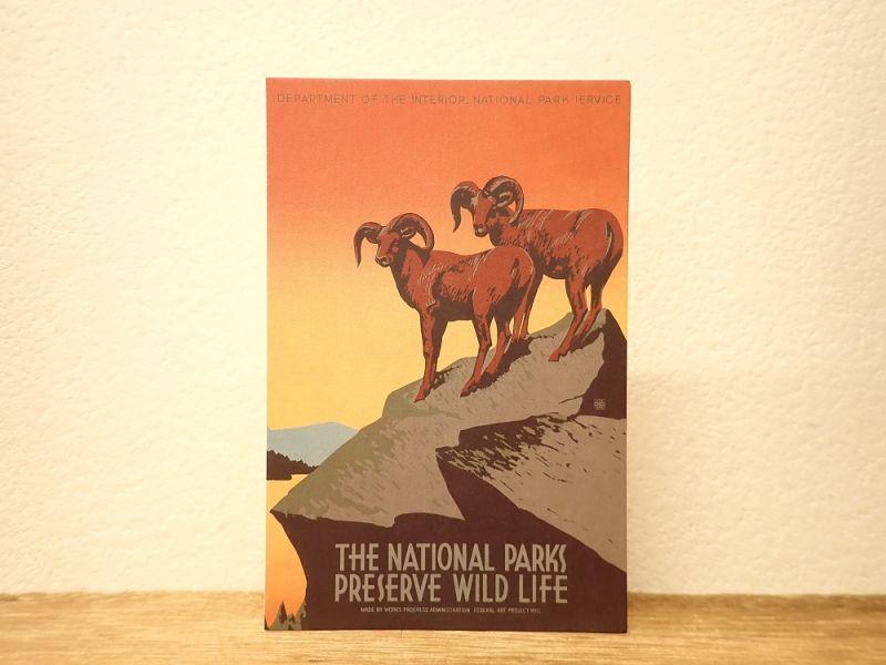 画像1: 【ネコポスOK】 アメリカ CAVALLINI/カバリーニ ポストカード NATIONAL PARKS  PRESERVE WILDLIFE