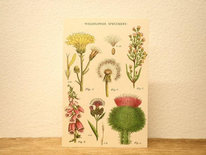 画像1: 【ネコポスOK】 アメリカ CAVALLINI/カバリーニ ポストカード WILDFLOWERS I