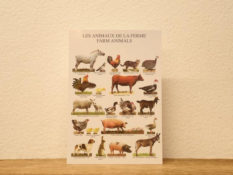 画像1: 【ネコポスOK】 フランス ポストカード LES ANIMAUX DE LA FERME FARM ANIMALS