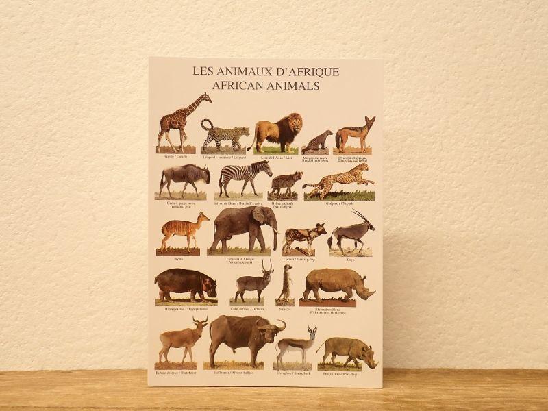 画像1: 【ネコポスOK】 フランス ポストカード LES ANIMAUX D'AFRIQUE AFRICAN ANIMALS