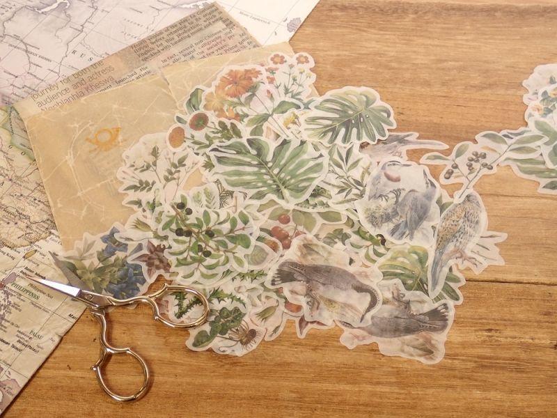 画像1: 【ネコポスOK】 和紙ステッカー 30柄入り 植物と鳥