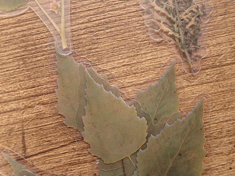 画像2: 【ネコポスOK】 PETシール ドライフラワーシリーズ 綿花